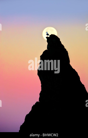 Full moon setting over rock at Bandon Beach with seagull. Bandon, Oregon - Stock Photo