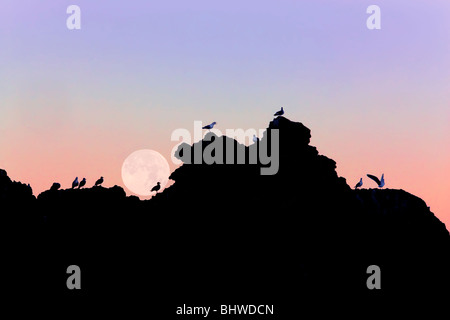 Full moon setting over rock at Bandon Beach with seagulls. Bandon, Oregon - Stock Photo