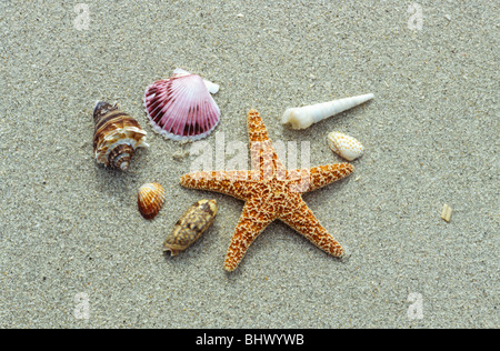 There are more than 160 species of seashells Sanibel and Captiva Islands Florida USA - Stock Photo