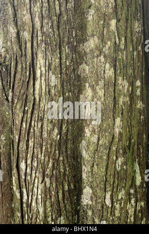 Bark - John Gollop - Stock Photo