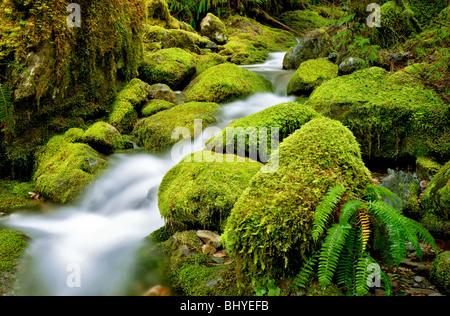Moss covered rocks in small stream at Opal Creek Scenic Recreation Area, Oregon - Stock Photo