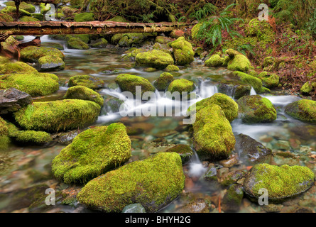 Bridge over small creek with mossy rocks. Opal Creek Scenic Recreation Area, Oregon - Stock Photo