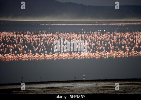 Flamingos at Lake Nakuru NP, Kenya, East Africa - Stock Photo