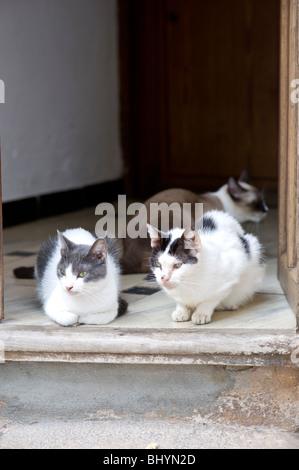 Cat in a doorway in Valldemossa on Majorca in Spain - Stock Photo
