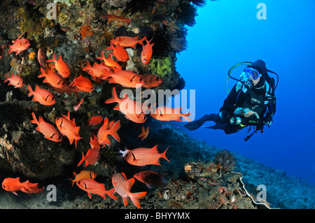 Myripristis murdjan, scuba diver with school of soldier fish, Gili Tepekong, Candidasa, Bali, Indonesia, Indo-Pacific - Stock Photo