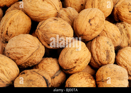 Pile of freh harvested walnuts - Stock Photo
