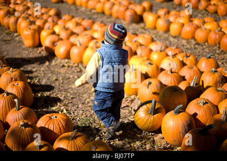 Young boy at a pumpkin patch. - Stock Photo