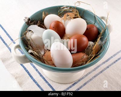 New laid Eggs - Stock Photo