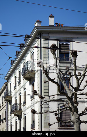 Detail of a building and a pruned tree in Geneva, Switzerland - Stock Photo
