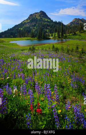 Wildflowers in Mount Rainier National Park in Washington state, USA - Stock Photo