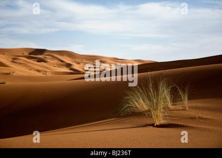 Tuft of grass in the desert - Stock Photo