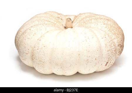 White pumpkin isolated on a white studio background. - Stock Photo