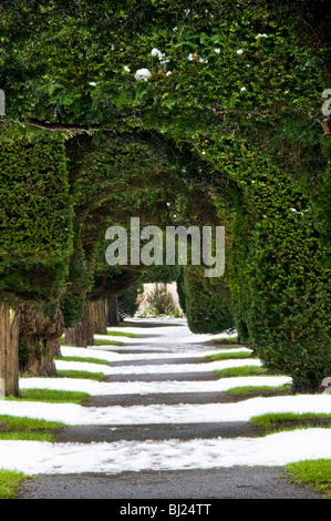 Yew trees in the churchyard of St Mary's, Painswick, Cotswolds, Gloucestershire, UK - Stock Photo