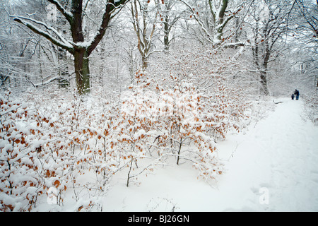 people walking through mixed deciduous woodland, covered in snow, winter, North Hessen, Germany