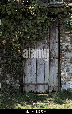overgrown door - Stock Photo