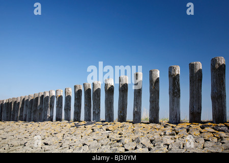 Row of wooden poles on breakwater at the beach at Hoofdplaat in Zealand / Zeeland, Zeeuws-Vlaanderen, the Netherlands - Stock Photo