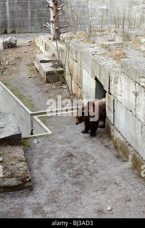 Bear in the bear pit (Bärengraben) in Bern, Sitzerland - Stock Photo