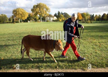 Man with his Dwarf Zebu, Potsdam, Germany - Stock Photo