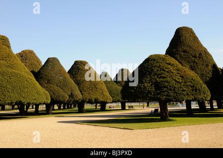 Yew trees in the Great Fountain Garden at Hampton Court, London, UK - Stock Photo