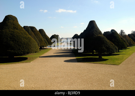 Yew trees in the Great Fountain Garden at Hampton Court, London, UK - Stock Photo
