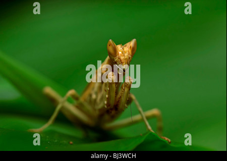 Insects of the jungle of Laos - Stock Photo