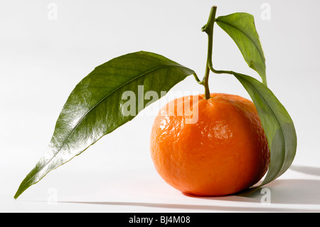 Juicy appetizing mandarin with green leaves Isolated silhouette on white background Food still life photography - Stock Photo