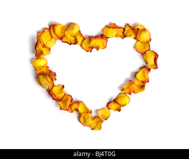 Heart shape made from withered yellow rose petals isolated on white background Conceptual pattern - Stock Photo