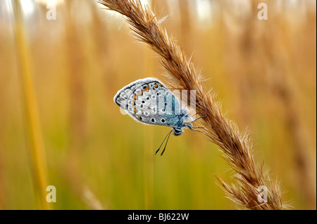 Insect macro, Russia, Moscow Region - Stock Photo