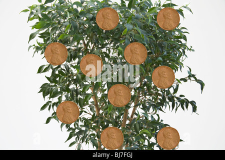 Studio Close up Concept of money growing on tree - Stock Photo
