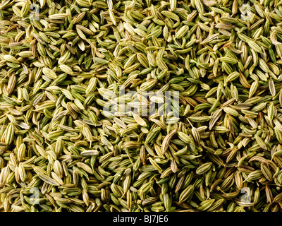 Whole fennel seeds , close up full frame - Stock Photo