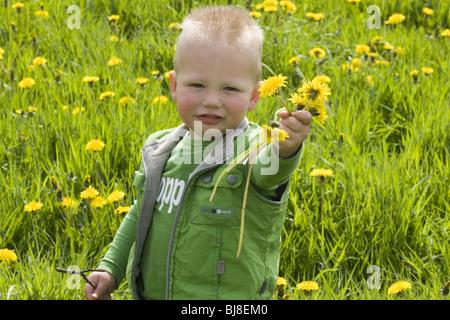 Little boy in dandelion field holding handful of dandelions - SerieCVS438301 - Stock Photo