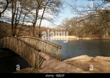 'Cannop Ponds', 'Forest of Dean', Gloucestershire, England, UK - Stock Photo