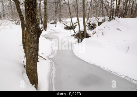 A frozen stream in a forest, Gorski kotar, Croatia - Stock Photo