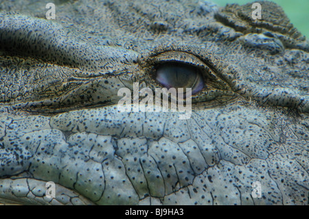 Eye of a large saltwater crocodile (Crocodylus porosus) displayed at the Alligator Farm, St. Augustine, Florida - Stock Photo