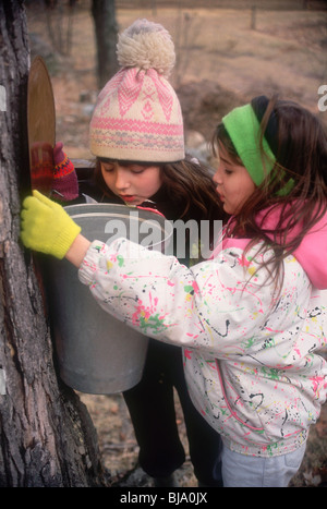 Young girls checking sap buckets on a maple tree, Maine. Photograph - Stock Photo