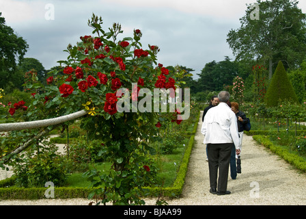 Paris, France, Public Parks, Group of People Visiting Bagatelle Rose Garden in Boulogne Park, - Stock Photo