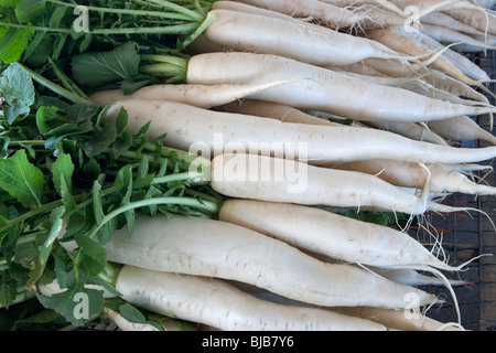 Harvested Daikon Radishes 'Raphanus sativus', - Stock Photo