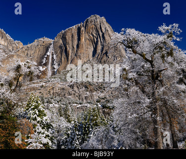 Snow covered trees in the valley of Yosemite National Park with the Upper Yosemite Fall waterfalls in winter USA - Stock Photo