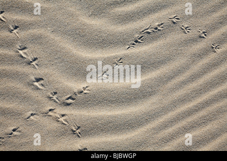Bird Tracks in sand, Texel Island, Holland - Stock Photo