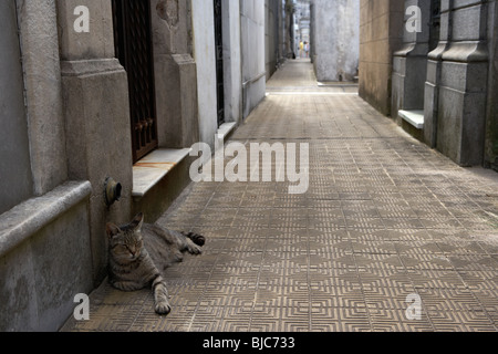 one of the many cats lying down in front of mausoleums on a street in recoleta cemetery capital federal buenos aires - Stock Photo