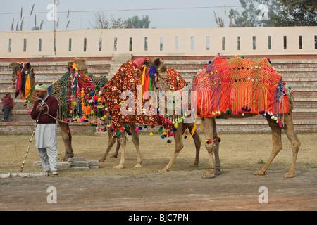 Muktsar Moktsar Punjab horse fair India Indian - Stock Photo