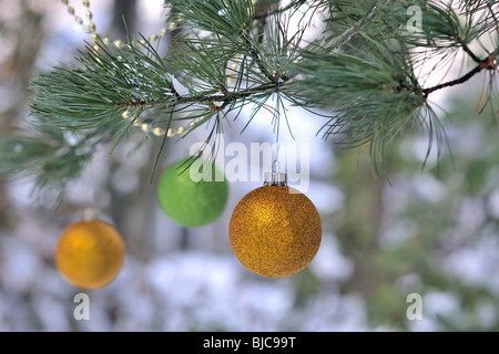 Christmas ornaments and gold garland hang from the boughs of a black pine tree (pinaceae) ( pinus nigra) snow and - Stock Photo