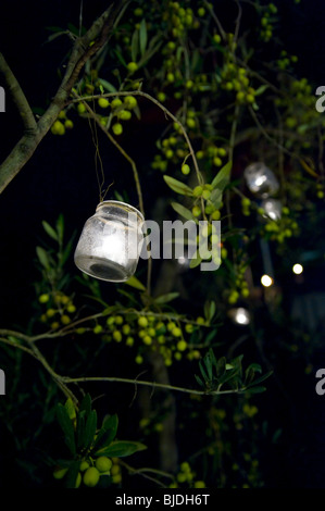 Candles in glass jars hanging from olive trees - Stock Photo