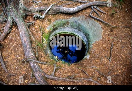 A small pothole on Gällnö Island of the Stockholm archipelago, Sweden - Stock Photo