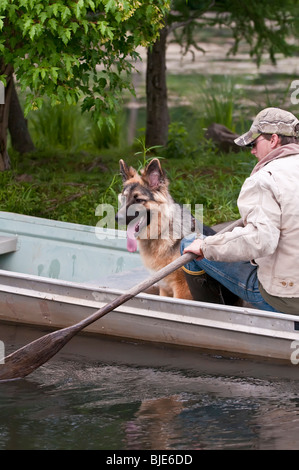German shepherd, Canis lupus familiaris, 7.5 months, Sandstone, Minnesota, USA - Stock Photo