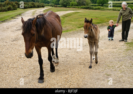 Grandmother holding hands with her grandson, watching a New Forest pony and her foal. - Stock Photo