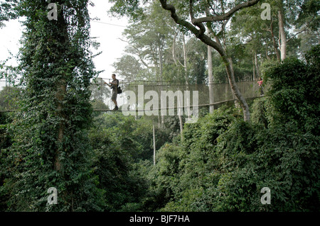 A tourist walks along the canopy for a magnificent view of the rainforest below at Kakum National Park. Ghana, West - Stock Photo