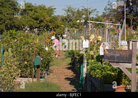 Ocean View Farms Community Garden, West Los Angeles, California, USA - Stock Photo