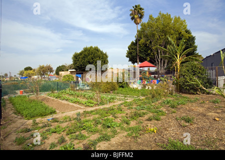 Stanford Avalon Gardens is a 7.6 acre community farm with over 200 plots. Watts, Los Angeles, California, USA - Stock Photo