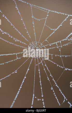 Water drops on a spiders web. Numbers in nature. Here you can see the number nine - Stock Photo